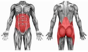 core spieren